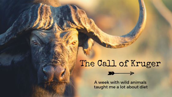 The Call of Kruger